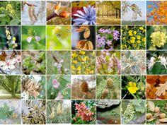 Le proprietà curative dei fiori di bach   Approfondimenti di naturopatia