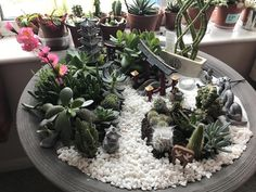 My mini japanese style garden but made with succulents and cacti also with a mini zen garden Eat Fruit, Fruit And Veg, Terrarium, Diy Jardin, Ice Plant, Fresh Tomato Salsa, Pot Plante, Healthy Buffalo Chicken, Naturaleza