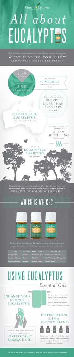 Eucalyptus Essential Oil - Eucalyptus Radiata, Eucalyptus Globulus, Eucalyptus Blue. Available at http://www.aromatherapyandmassage.com/youngliving