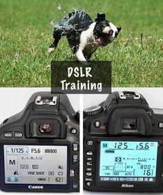 Photography Tutorial: A Quick Guide to Understanding Your DSLR Camera - Photography, Landscape photography, Photography tips Dslr Photography Tips, Photography Lessons, Photography For Beginners, Photoshop Photography, Photography Business, Photography Tutorials, Photography Photos, Digital Photography, Flash Photography