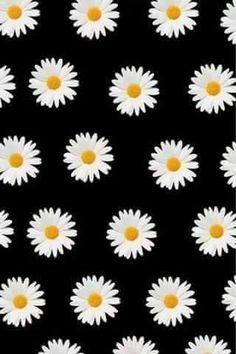 Fondo de pantalla 14 daisy wallpaper