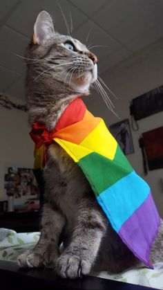 Lovely cat with a rainbow LGBT flag. Save this beauty Tattoo Geek, Lgbt Memes, Gay Aesthetic, Photo Chat, Rainbow Aesthetic, Lesbian Pride, Cute Gay, Cute Animals, Pets