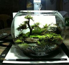 Moss terrarium. Duterte.