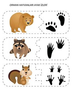 Animal Activities, Montessori Activities, Infant Activities, Activities For Kids, Woodland Animals Theme, Forest Animals, Bear Footprint, Animal Footprints, Animal Tracks