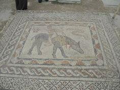 DSCN0730 mosaic floor in Roman villa, Volubilis, Morocco