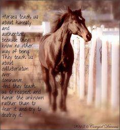 Horses teach us