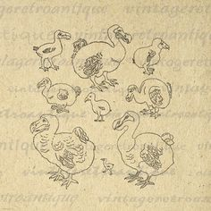 Dodo Birds Bird Collage Sheet Image by VintageRetroAntique on Etsy
