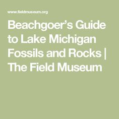 Beachgoer's Guide to Lake Michigan Fossils and Rocks   The Field Museum
