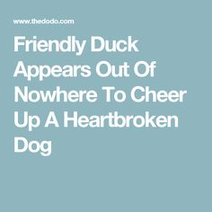 Friendly Duck Appears Out Of Nowhere To Cheer Up A Heartbroken Dog