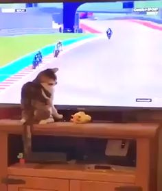 Cats are assholes Funny Animal Memes, Funny Animal Videos, Cute Funny Animals, Funny Animal Pictures, Cute Baby Animals, Cat Memes, Funny Cute, Funny Jokes, Cute Kittens