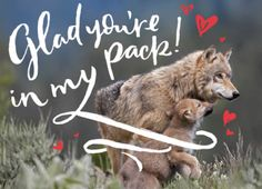 Adopt a wolf in Yellowstone by giving this NRDC Green Gift  https://www.nrdcgreengifts.org/pack