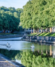 The Aura River - Turku, Finland - August 14th 2012 in the photo: 'Eiders' created by artist Reima Nurmikko http://www.turku.fi/public/default.aspx?contentid=362357=2=en-US=23)