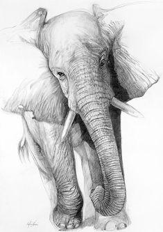 Nafisa'S fine art gallery - paintings, drawings, sculpture etc elephant drawings, elephant sketch Elephant Sketch, Elephant Art, Elephant Drawings, Origami Elephant, African Elephant, African Animals, Animal Drawings, Cool Drawings, Pencil Drawings