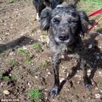 Arthur, el perro callejero rescatado en la selva de Ecuador, corre una carrera benéfica   Schnauzi.com