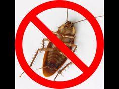 15 best Best Roach Killers images on Pinterest | Cockroach repellent ...