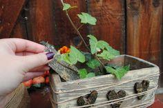 Inšpirácie na jesenné dekorácie: Nech je to farebné!
