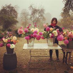 Anna preparing buckets yesterday morning in the mist @thelandgardeners #fantasticanna