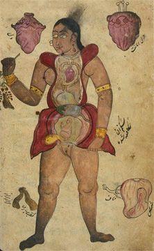 Anonymous anatomical illustration of a Persian. - Anonymous anatomical illustration of a Persian woman, circa mid Medical Student, Medical Art, Medical History, Anatomy Drawing, Anatomy Art, Human Anatomy, Medical Drawings, Medical Illustrations, Medical Anatomy