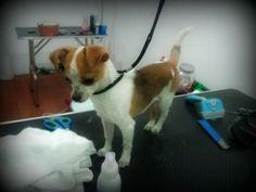 El viernes nos visitó la mascota de Lolita's Closet, una tienda de ropa y complementos vintage en la C/ Puentezuelas... ¡¡seguro que la conocéis!!.  Aprovechó su visita a la #peluqueriacanina para darse un baño y realizarse una muda manual.  #mascotas #perros