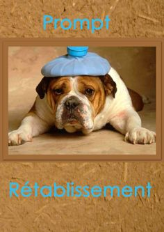 Soigne Toi Bien, Get Well Soon, Peppermint, Recovery, French Bulldog, Messages, Humor, Funny, Dogs