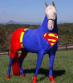 Super horse - cute for parades