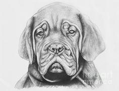 Title  Dogue De Bordeaux Dog   Artist  Lena Auxier   Medium  Drawing - Pencil On Paper