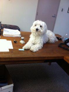 Office Luka.