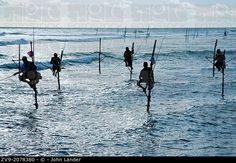 Sri Lankan Stilt Fishermen - Stilt fishing is fishing in relatively shallow water on a platform made up of a stilt. This is a common method used by Sri Lankan fisherman when fishing in or arround reefs not far away from the shore. Most of the stilt fishing is done along the South Coast of Sri Lanka near the village of Kogala. © John Lander / age fotostock