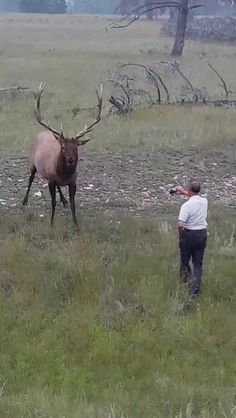 Let me move in for a closeup Namaste, Bull Elk, Horse Videos, Mountain Wallpaper, Mundo Animal, Nature Images, Girl Wallpaper, Siamese Cats, Videos Funny