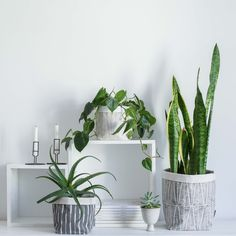 NOVELLA is a contemporary Cape Town based decor, design & homeware brand. The collection includes local patterns, fabrics and home accessories. Cape Town, Home Accessories, Pots, Archive, Contemporary, Pattern, Design, Decor, Decoration