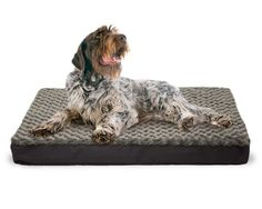 FurHaven NAP Pet Bed Egg-Crate Orthopedic Pet Mattress Deluxe Dog or Cat Bed, Water-resistant base *** See this great product.