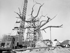 Swiss Family Tree House opened November 18, 1962  The Disneyodendron semperflorens grandis (large ever-blooming Disney tree) was man-made, with concrete roots, steel limbs and 300,000 plastic leaves.
