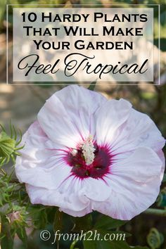 This list of hardy plants that look tropical is the BEST! I have always wanted my backyard to be a lush tropical garden, but I live in a cold climate. Now I know what to plant! Definitely pinning!