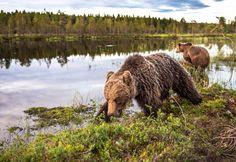 Bearlake -