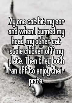 """My one cat bit my ear and when I turned my head, my other cat stole chicken off my plate. Then they both ran off to enjoy their prize."""