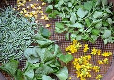 5 Summer Herbs to Preserve Fresh ,,. While many herbs can be dried and stored for later use in teas and remedies, some plants are best preserved fresh.