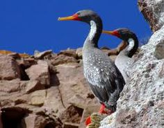 osCurve Aves: Aves Marinas y Playeras Área Educación Ambiental -... http://oscurveaves.blogspot.com
