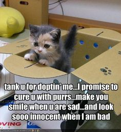 see mom we do need a kitten @Wendy Gumpper