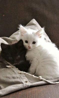 B & W kittens