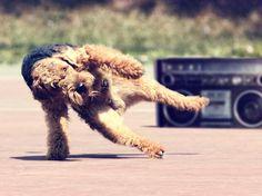 break-dancing pup
