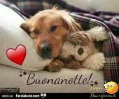 Good Morning Good Night, Animal Pictures, Cute Animals, Teddy Bear, Dogs, Cristiani, Italy, Sweet Dreams, Congratulations