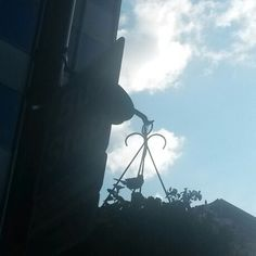 Not the clearest silhouette ever, but a little bird on a hanging basket at a bus stop