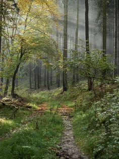 Forest Path, Tree Forest, Beautiful World, Beautiful Places, Pretty Pictures, Random Pictures, Photos Voyages, Walk In The Woods, Plein Air