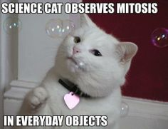 science cat observing mitosis