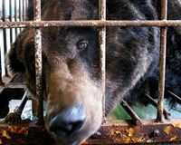 Stop Bear Bile Farming In China  Click on the picture and Sign this petition!  This is urgent!