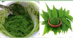 DIY Face Masks  : Neem Tree  One Of The Most Beneficial Plants For The Human Health