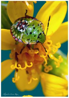 Macro insecto 2 by Alejandro  Ferrer Ruiz , via 500px