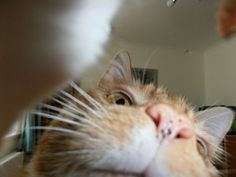 Selfie by Mr Paws, the cat.