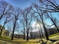 Tym razem to już na pewno wiosna  To będzie ładny weekend #gliwice #wiosna #springtime (fot. A Kustra)