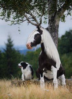 20 Animals That Are Complete Brothers From Other Mothers. A compilation of pictures of animals from different species that look too much alike Pretty Horses, Horse Love, Beautiful Horses, Animals Beautiful, Majestic Animals, Beautiful Beautiful, Cute Baby Animals, Animals And Pets, Funny Animals